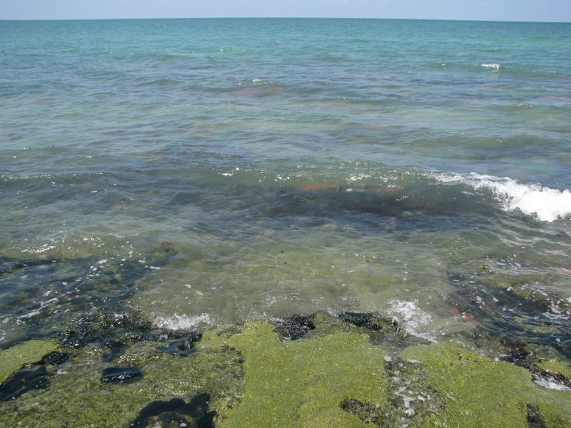 Snorkeling Point Of Rocks Siesta Key Florida