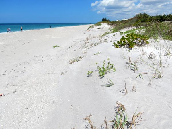 Sand dunes on Manasota Key Beach, Florida.