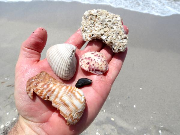 Typical shells and rocks found on Manasota Key's beaches.