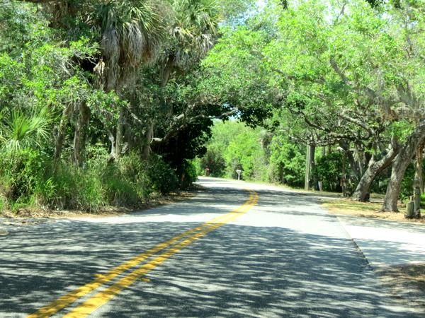 Driving on Manasota Key's canopy road.