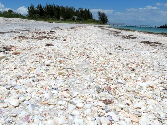 Shells on the beach at Gasparilla Island, Florida