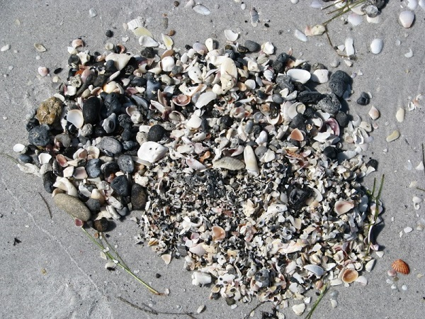A sample of sand, shell and fossils from Don Pedro Island beach.