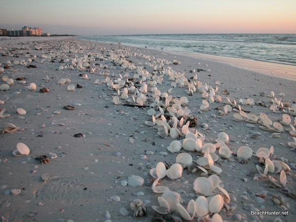 Shells on Fort Myers Beach, Florida