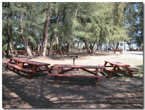 Picnic area at South Lido Park, Sarasota, Florida