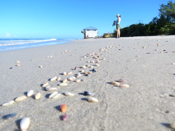 Little Gasparilla Island beach with coquina shells.