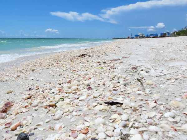 Shells on Lover's Key beach.