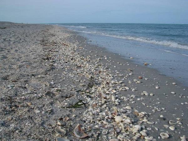 Palm Island Resort - Gulf coast beach vacation getaway ...