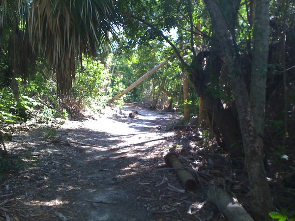 Cabbage Key nature trail.