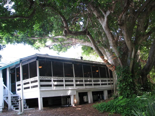 Cabbage Key Restaurant shaded by ficus tree.