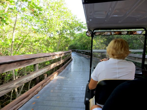 Riding the tram through the mangroves to Clam Pass beach, Naples, Florida.