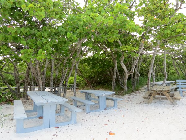 Picnic tables on the beach under seagrape trees, Delnor Wiggins Park.