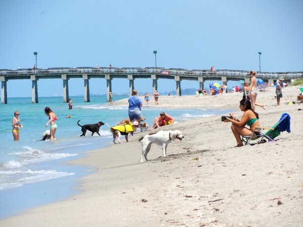 Paws Park dog beach, Venice, Florida.