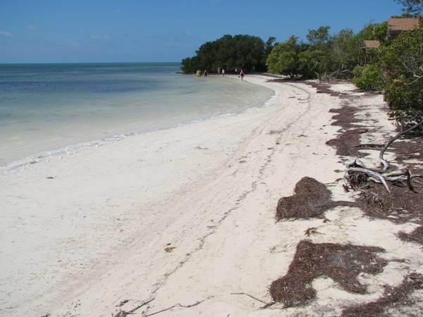 Anne S Beach