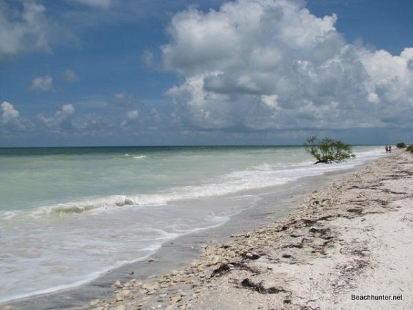 Chalky Green Water Near The Beach On Honeymoon Island Florida