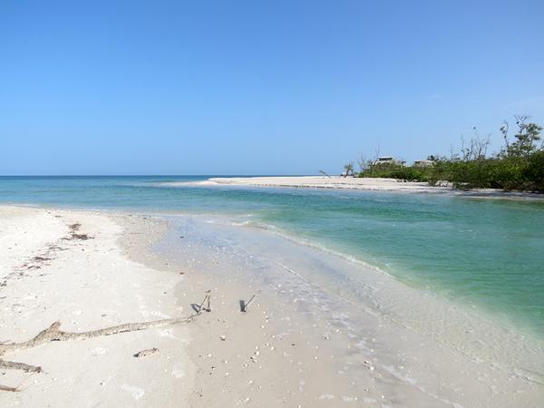 Clam P Naples Florida